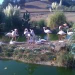 SafariFlamingos